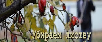 Убираем листву в «Яблоньке»
